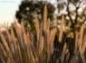Sun-lit Grass