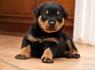 Rowdy the Rottweiler #3