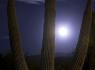 Hunters Moon & Sentinel