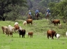 Southwest Cattle Drive
