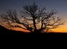 Chiracahua Sunrise